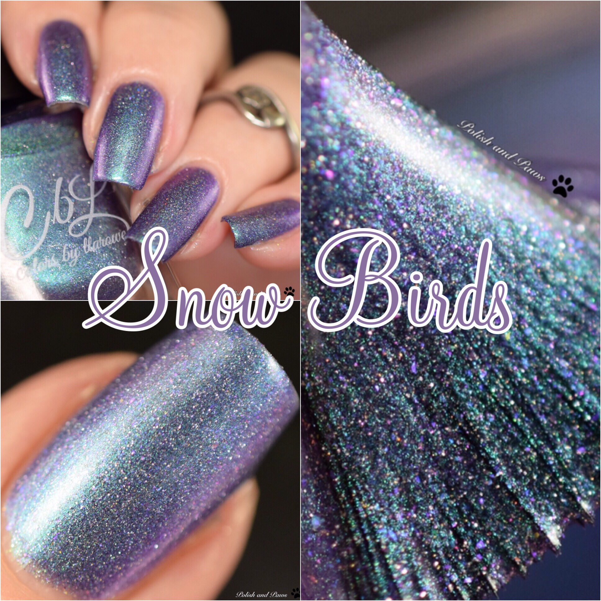 Colors by Llarowe Snow Birds